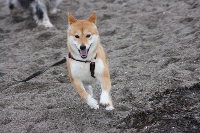 dog-15063_640