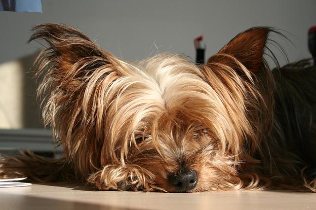 dog-15373_640
