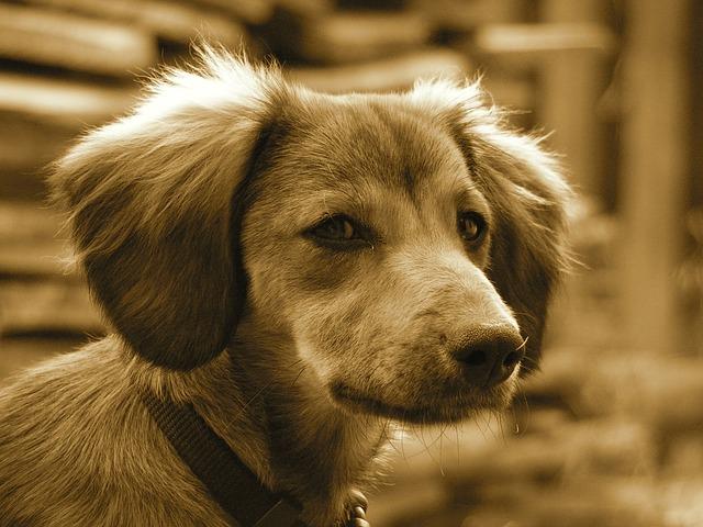 dog-449976_640