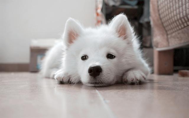 dog-617040_640