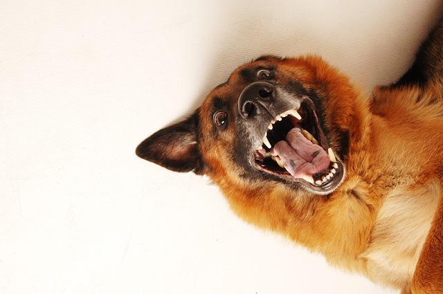 dog-684036_640