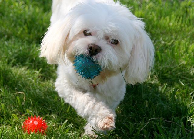 dog-733926_640