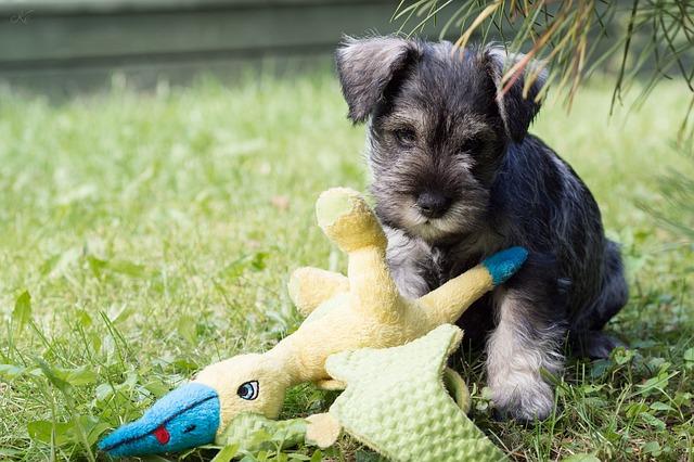 puppy-434841_640