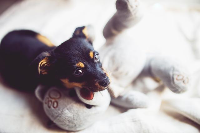 puppy-791834_640