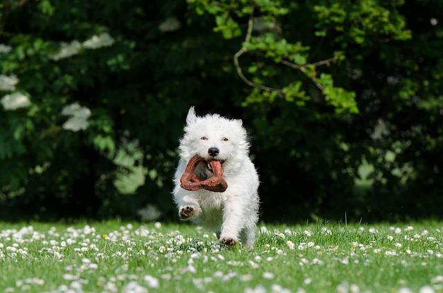 small-dog-750607_640