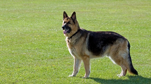 dog-317020_640