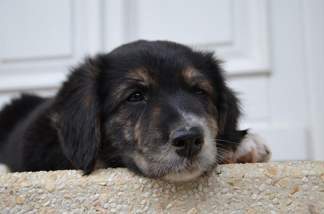 dog-821314_640