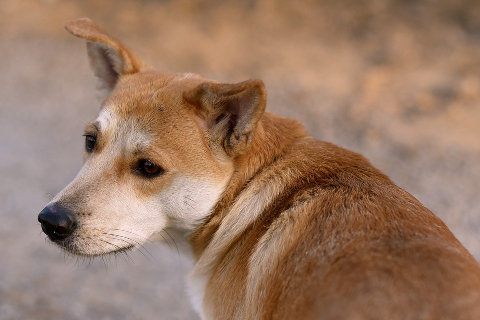 doggy-1057684_960_720