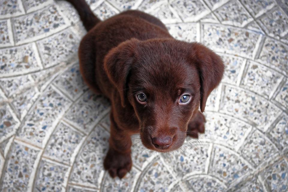 puppy-1047722_960_720