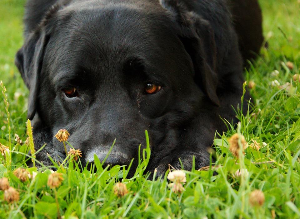dog-855757_960_720