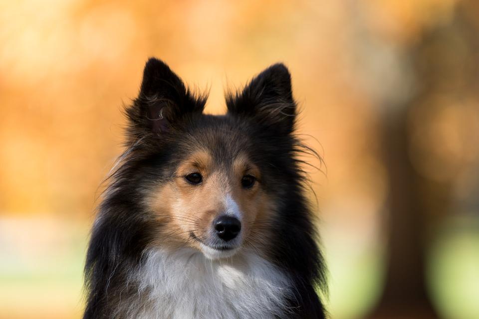 dog-1023008_960_720