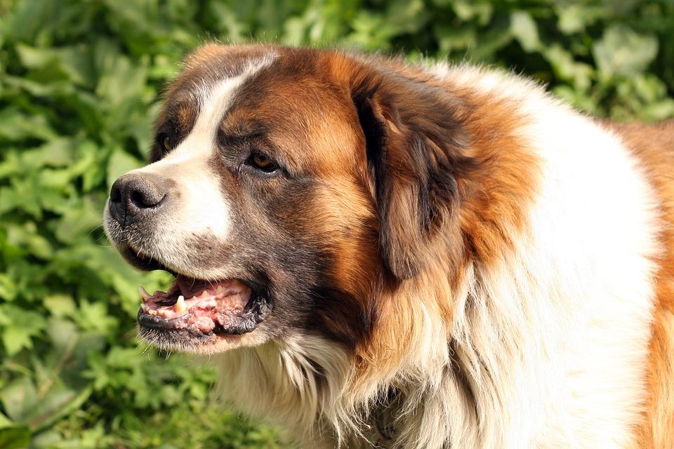 dog-1226205_960_720