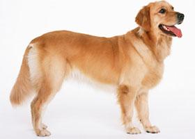 犬 画像2