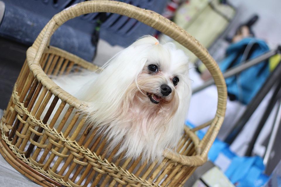canny-dog-show-1166219_960_720
