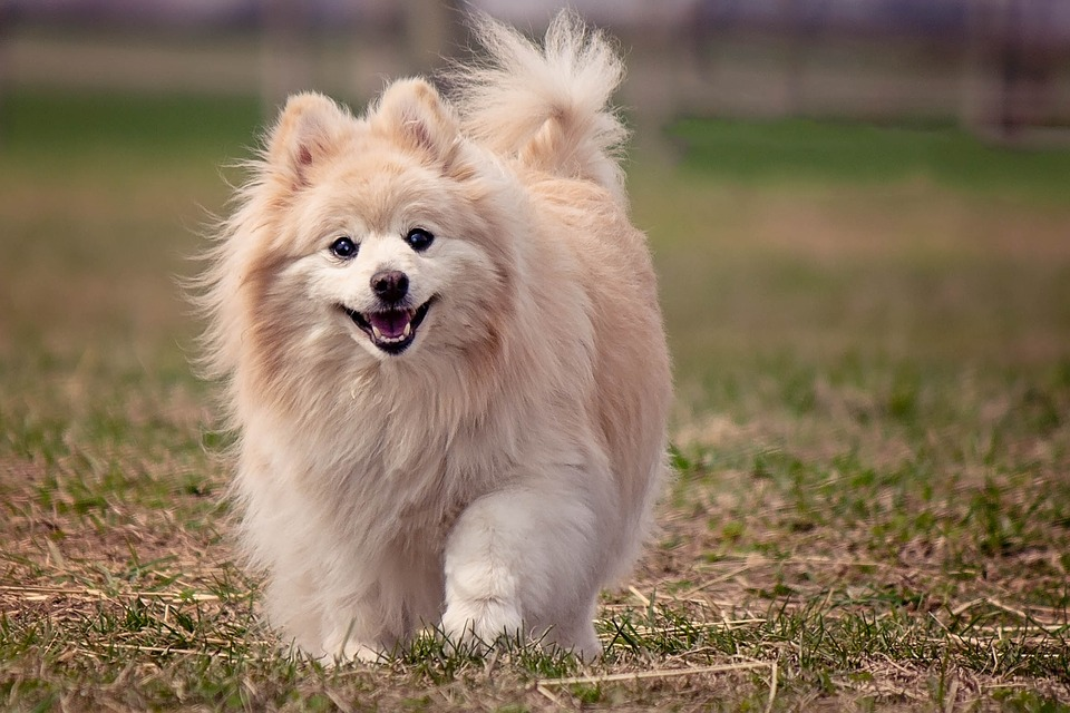 dog-1113398_960_720
