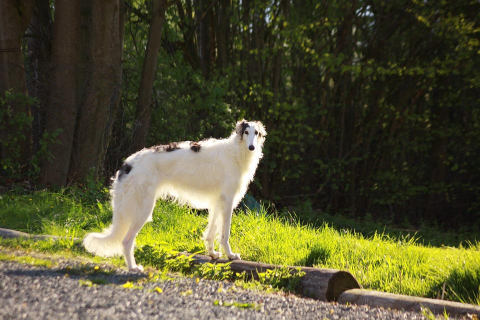 dog-633817_960_720