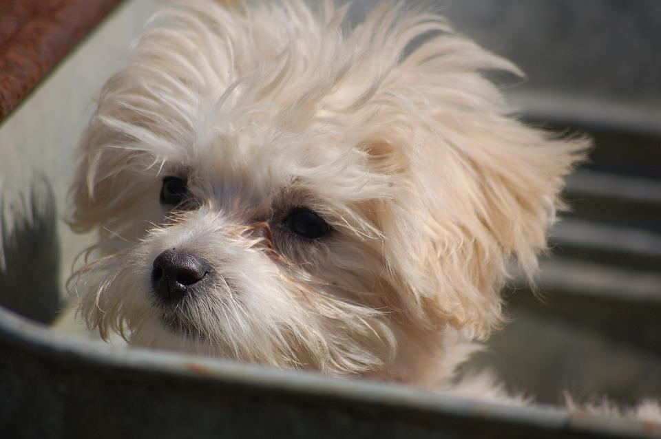 puppy-1491605_960_720