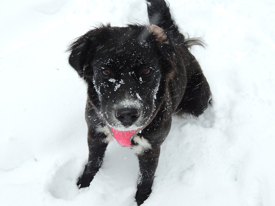 cute-dog-in-the-snow-1205354_960_720