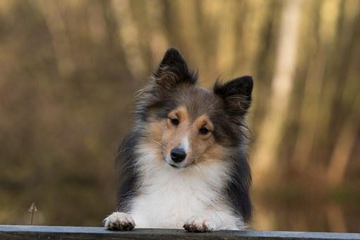 dog-1086285__340
