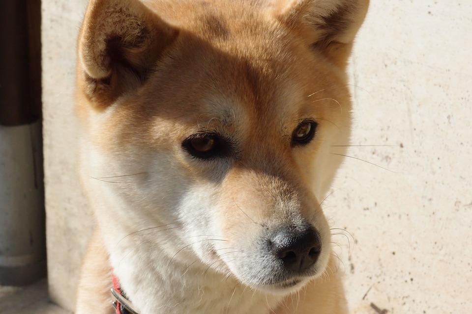 dog-1203349_960_720