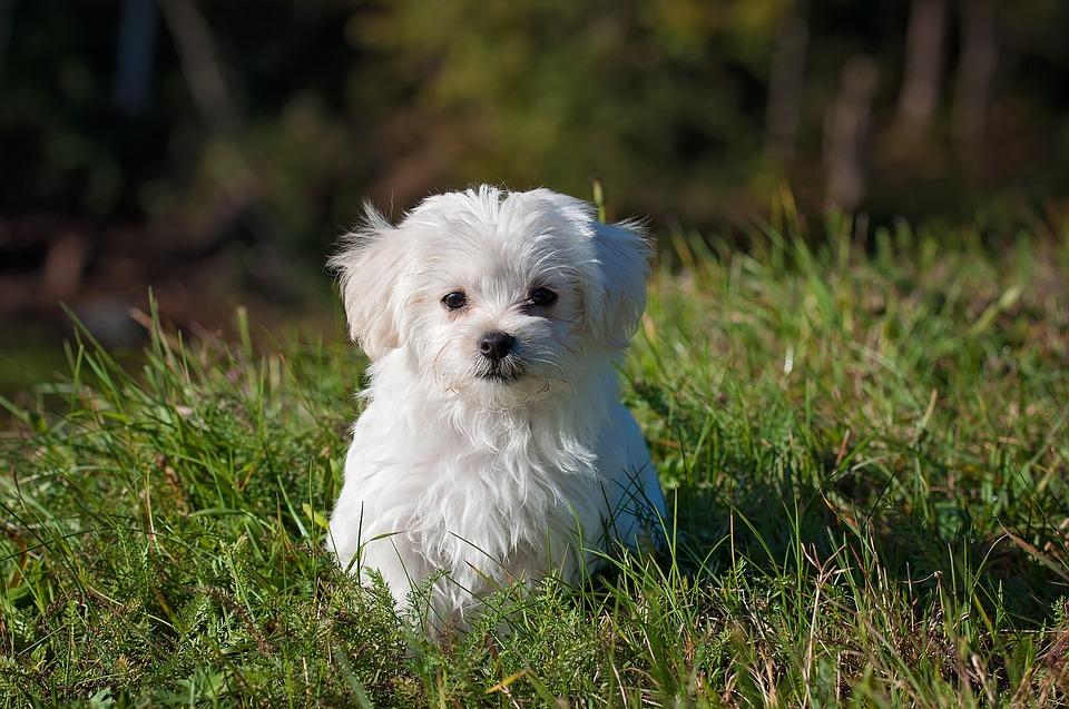 dog-1123016_960_720