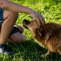 犬がうっとりする撫でられて気持ちいい6つのポイント