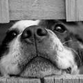 気づいてあげよう!分かりにくい犬の8つのストレスサイン
