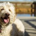 犬の知能は世界ランク6位!犬種ごとの頭の良さランキング