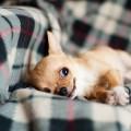 うちの犬って甘えん坊すぎる?12のチェックでわかる犬の気持ち